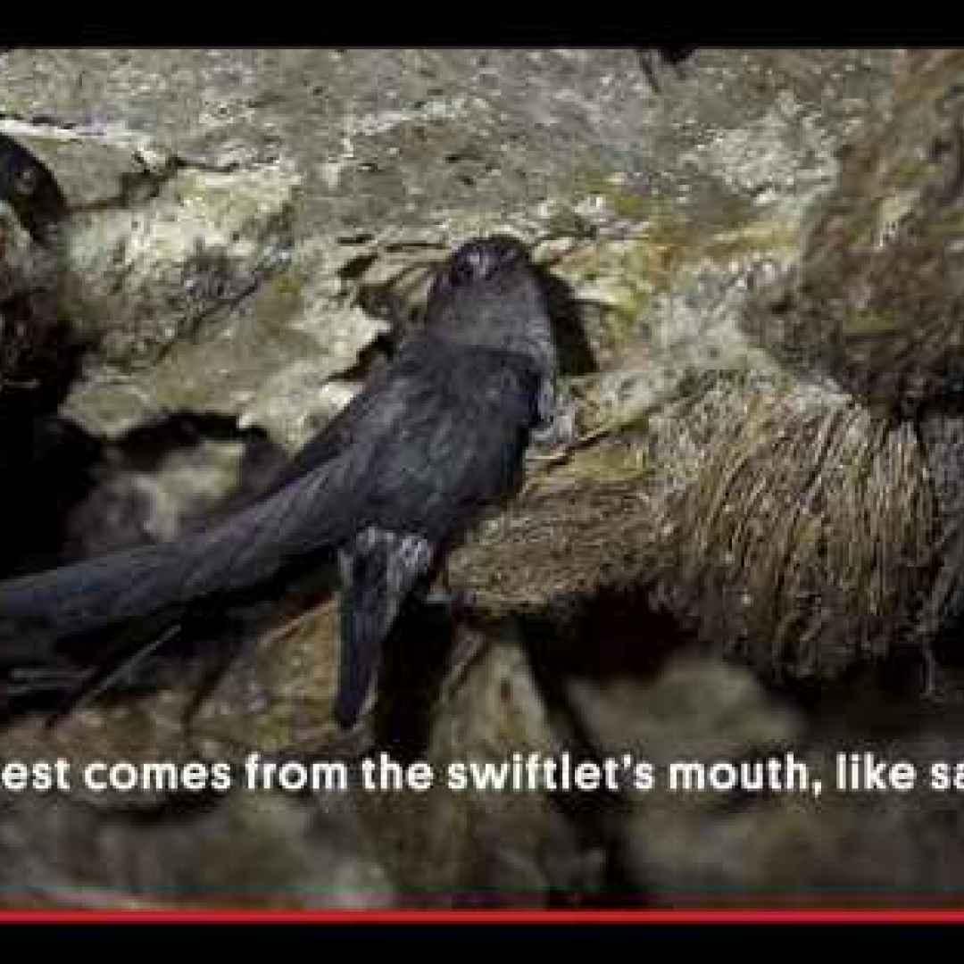 animali  uccelli  filippine  oriente