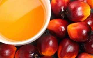 olio di palma  grassi saturi  cancro
