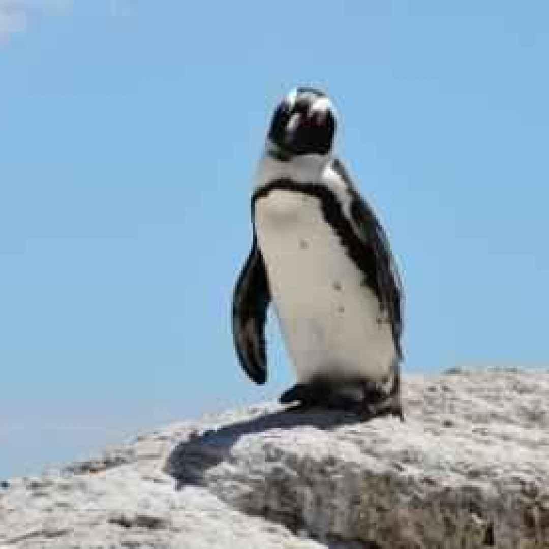 Morto grape kun il pinguino innamorato di un cartone