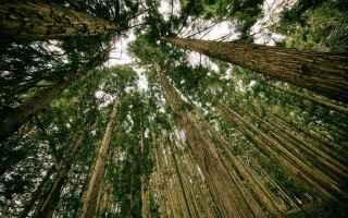 Ambiente: ambiente  inquinamento  ecologia