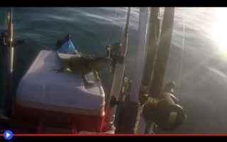 Animali: iguane  animali  mare  strano  kayak