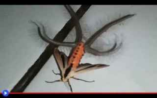 Animali: animali  insetti  lepidotteri  falene