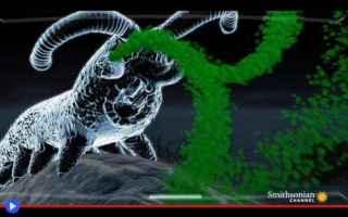 Animali: animali  vermi  millepiedi  onychophora