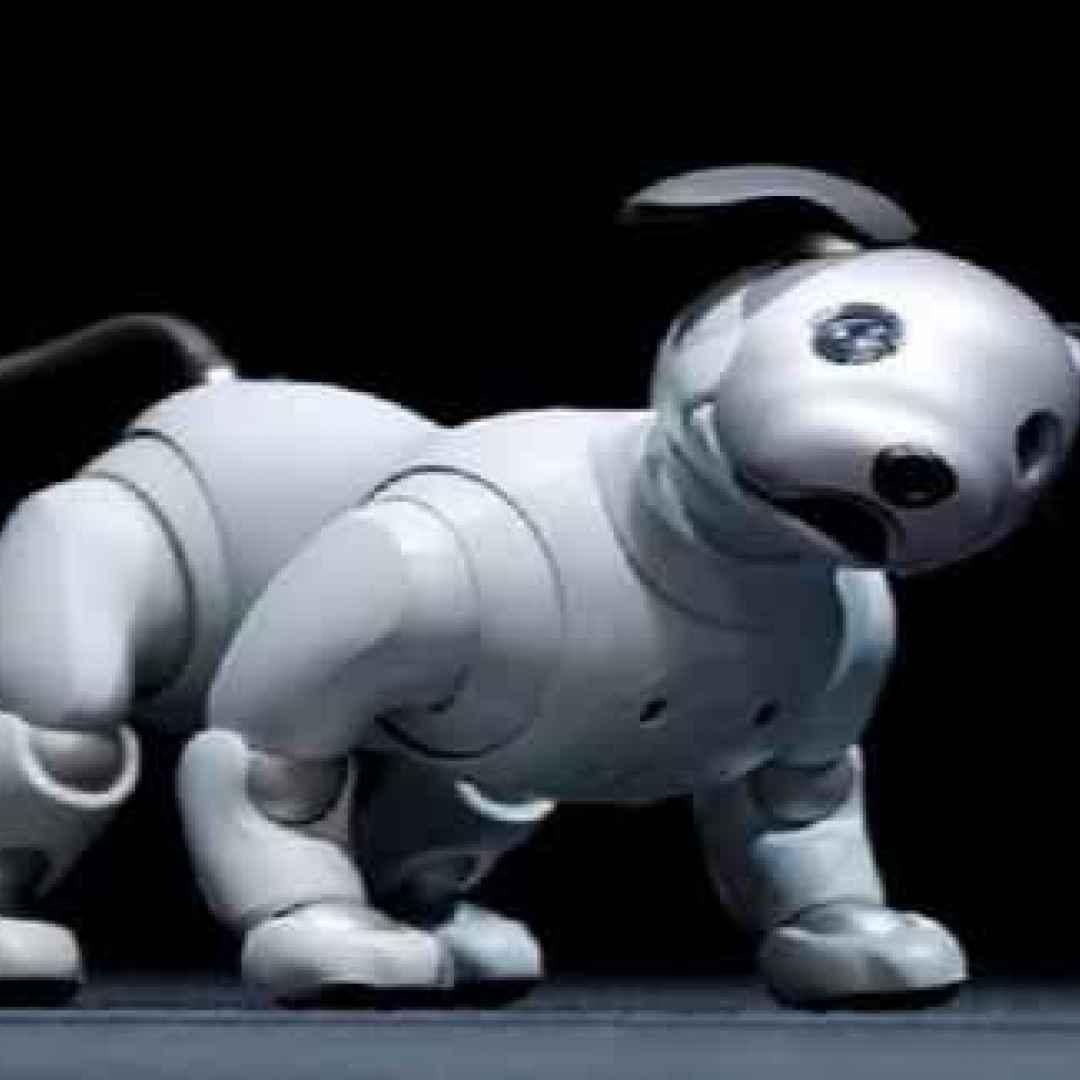 robot  sony  aibo  cane robot  cane