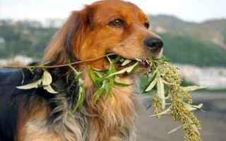 Animali: cane  veterinario  insufficienza renale