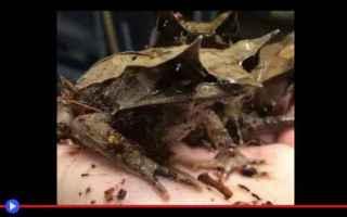 Animali: animali  rettili  rane  mimetismo