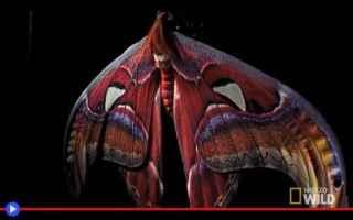 vai all'articolo completo su lepidotteri