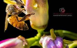 Foto: ispirazioni  fotografia  macro  insetti