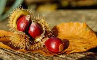 Alimentazione: castagne  alimenti sani  dieta