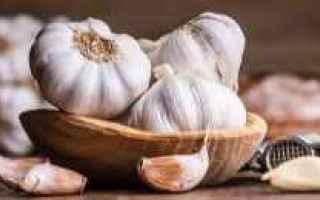 aglio  allium sativum  bulbo  cucina
