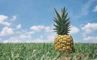 L'Ananas viene spesso inserito nelle diete ma questa volta si tratta proprio dell'alimento princ