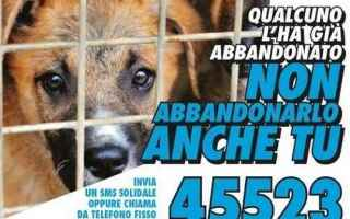 Animali: cani  cani randagi  animali  sms  donazione