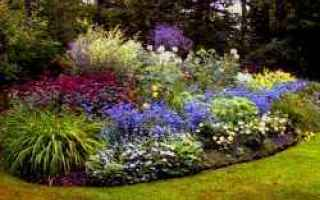 Giardinaggio: piante  sviluppo  rapido