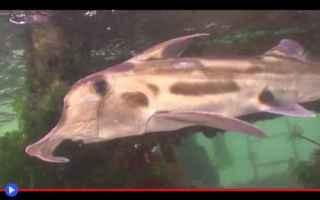 animali  pesci  strane creature  abissi