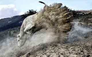 Mostre e Concorsi: concorso fotografia national animali