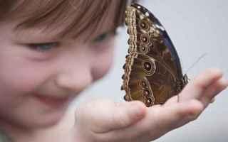 epidermolisi bollosa  bambini farfalla