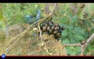 Ambiente: animali  insetti  infestazioni