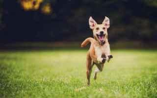 Animali: dog  cani  animali
