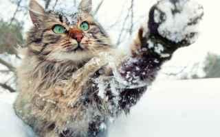 Animali: gatti  pets  pet  blog  gatto