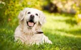 Animali: cane  veterinario  pancreatite