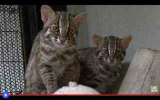 Animali: animali  felini  gatti  giappone