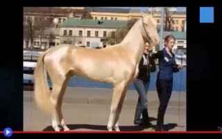 animali  cavalli  allevamento  asia