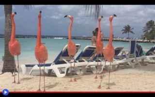 Animali: animali  uccelli  aruba  sudamerica