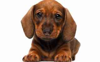 Animali: cane  educazione  addestramento
