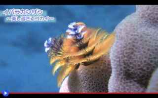https://www.diggita.it/modules/auto_thumb/2018/01/09/1617671_Christmas-Tree-Worms-500x313_thumb.jpg