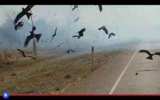 animali  uccelli  rapaci  falchi