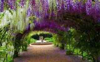 pergola  pergolato  legno  fiori