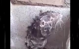 Filmati virali: topo  doccia  animali  video virali