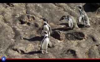 Animali: animali  uccelli  pinguini  natura