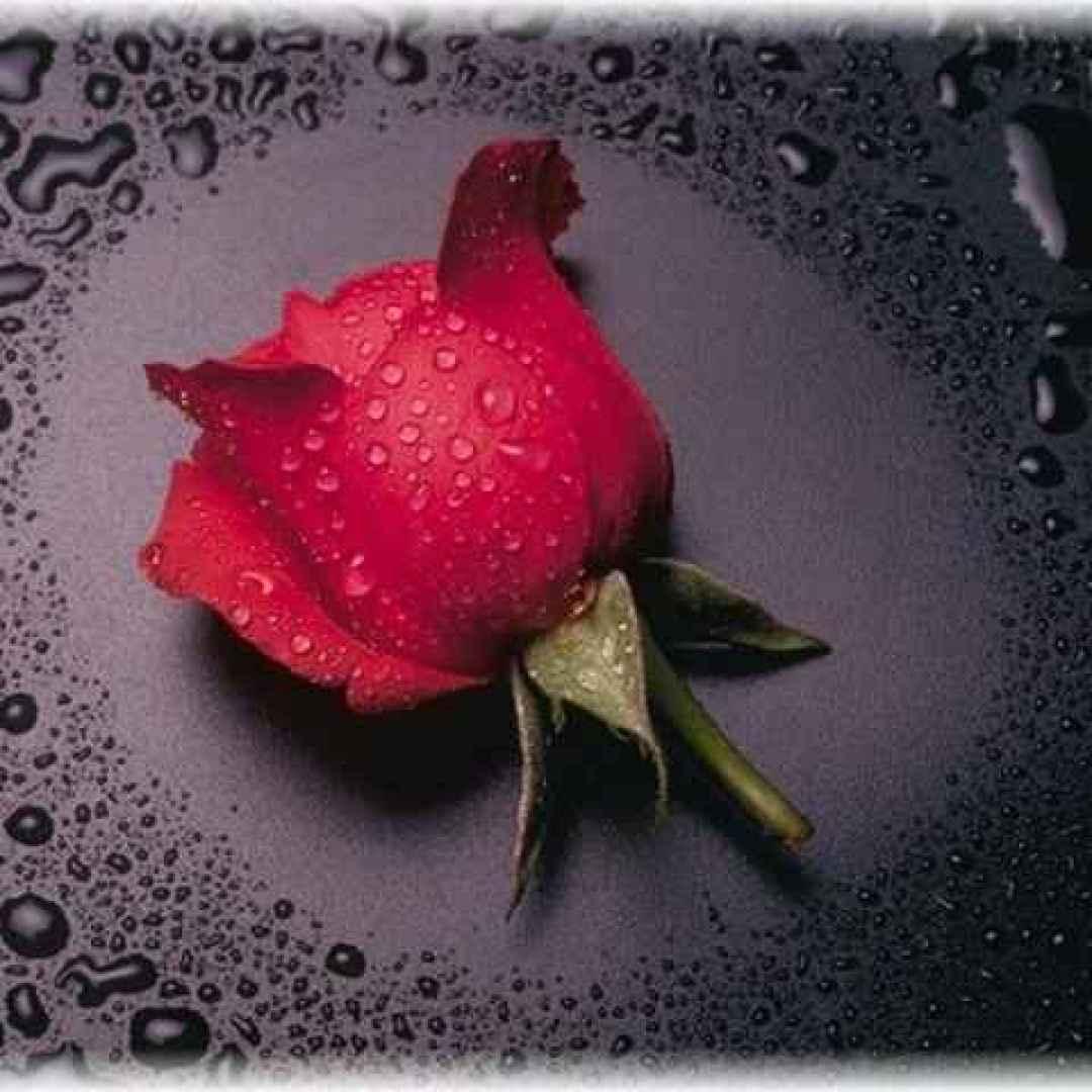 flora  mitologia  palermo  rosa  zefiro