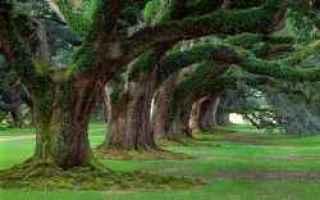alberi  crescita  dimensioni  specie