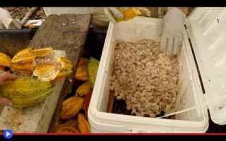 Gastronomia: cibo  gastronomia  vegetali  frutti