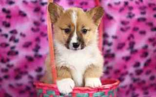 Animali: cane  addestramento cane