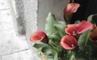 Amore e Coppia: maschi  uomini  galanteria