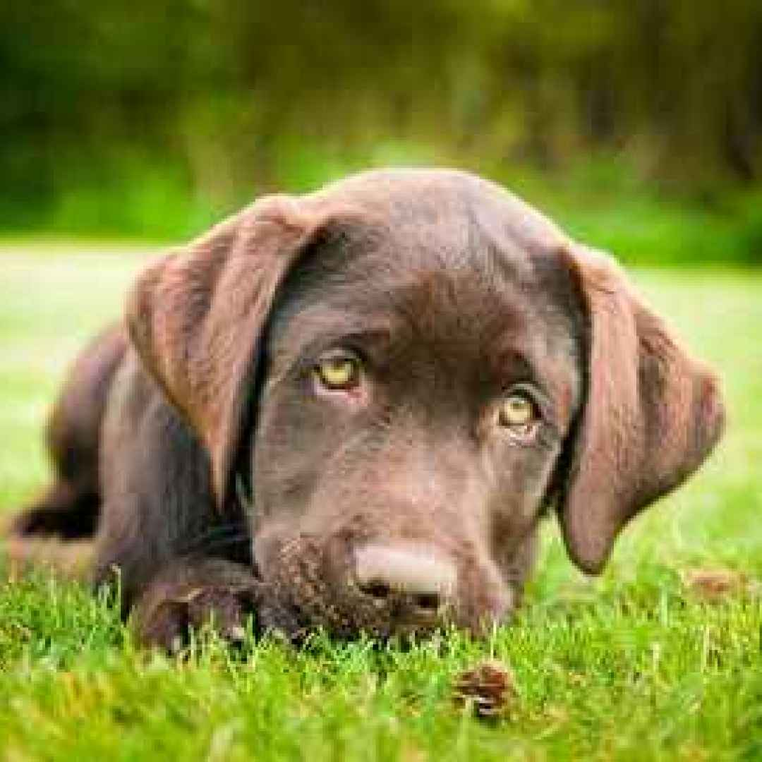 addestramento cane  cane