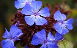Salute: fiori  bach  benessere  salute