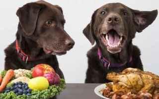 Animali: cane  alimenti cani  intolleranze