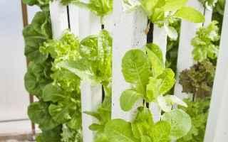 Le vertical farm rispondono a un bisogno mondiale. Si tratta di serre più costose del normale