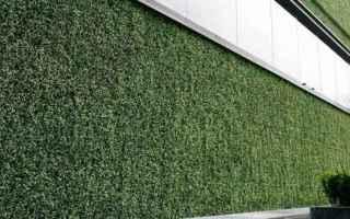 giardinaggio  prato verticale  erba