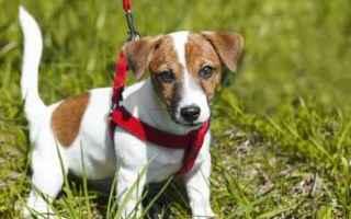 Animali: cane  educare un cane