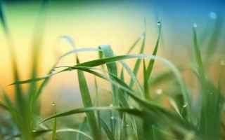 Psiche: interpretazione sogni  sognare erba