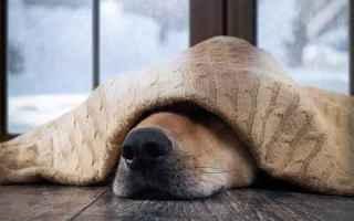 Animali: cane  raffreddore