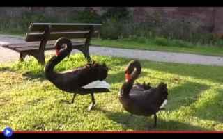 Animali: animali  cigni  castelli  germania