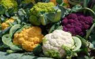 cavolo  broccolo  orto  coltivazione