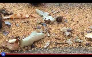 Animali: animali  insetti  stati uniti  vespe