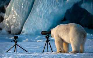 Foto: orso  polo  fotografia  natura